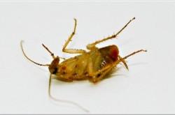 Platinum High Rise Pest Control