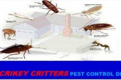 Crikey Critters Pest Control